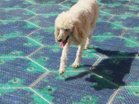 Uitvinder werkt aan solar bestrating