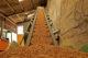 Biomassa 80x53