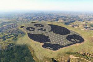 Panda zonnepark is een feit