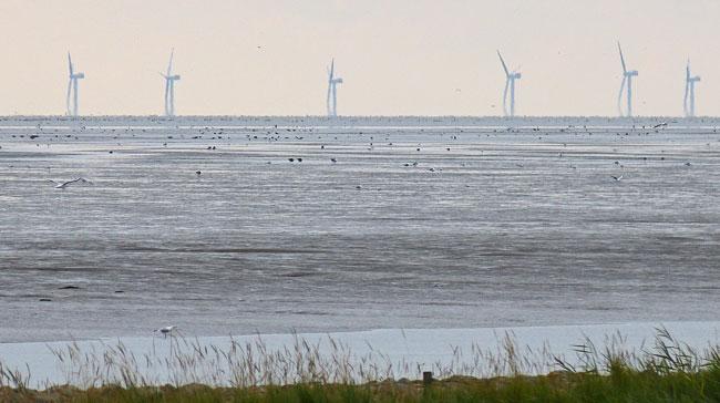 Door energie-overschotten van windmolens op te slaan in waterstof krijgt TenneT meer flexibiliteit in zijn netwerk.